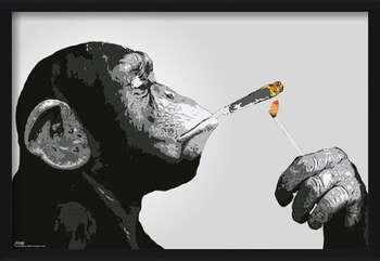 Oprawiony plakat Steez - Monkey Smoking