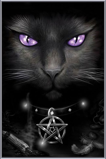 Plakat Magical cat