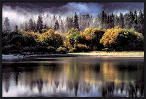 Plakat  Forest - autumn lights