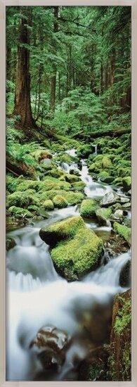 Plakat  Forest waterfall