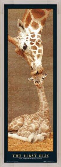 Plakat  The first kiss - giraffes