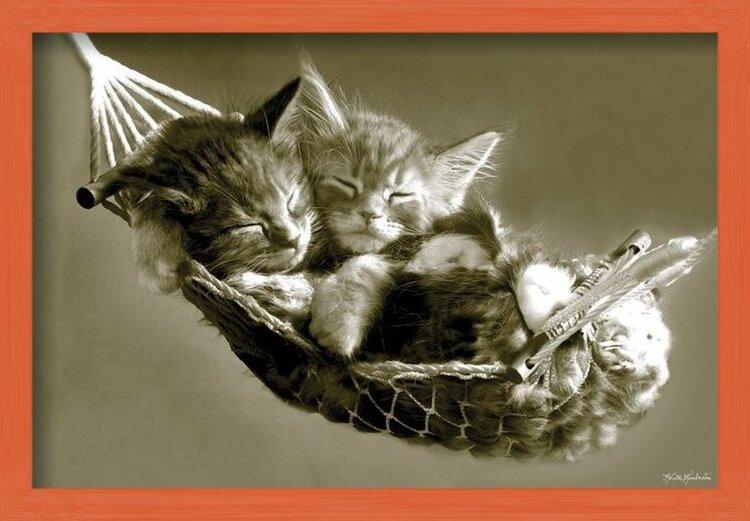 Plakat Keith Kimberlin - kittens in a hammock