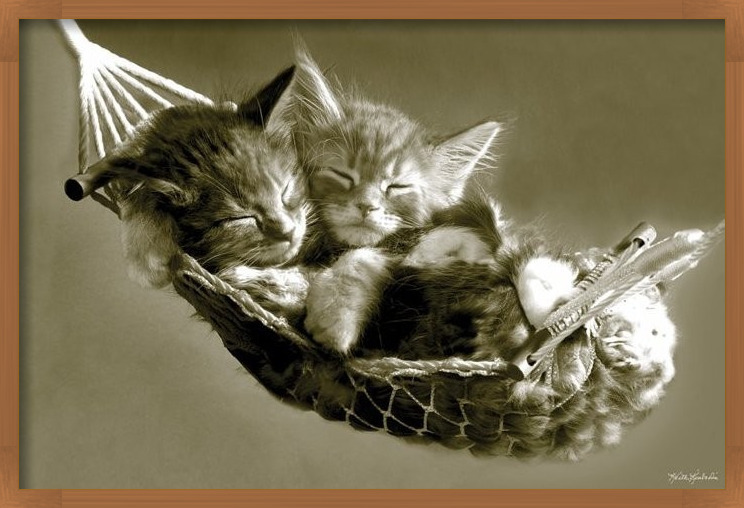 Plakat Keith Kimberlin - kittens in a hammock