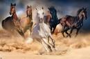 Konie - Five horses